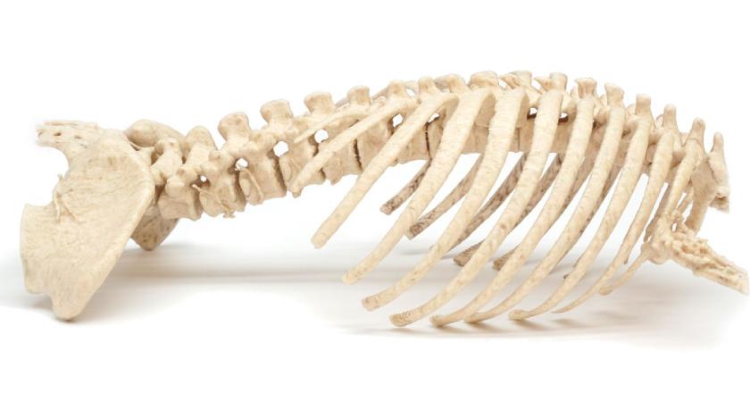 PS-Medtech stvara fotorealistične 3D dijelove ljudskog tijela uz pomoć Mimakija